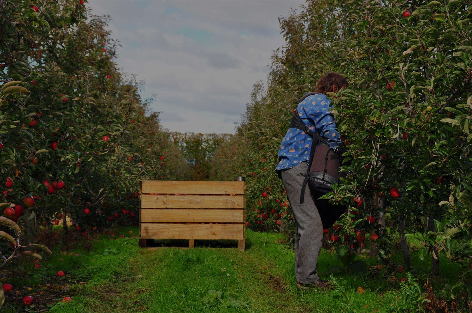 Sacked Kiwi NZ's Employment Law Experts orchard worker
